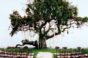 neobichnie-svadebnie-arki-0033