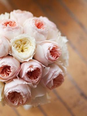 austin_rose_36