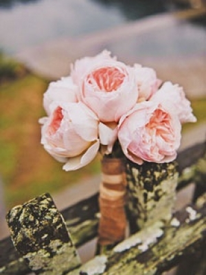 austin_rose_38