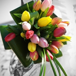 buket-tulip36