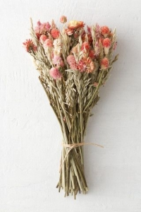 dried_flowers_16
