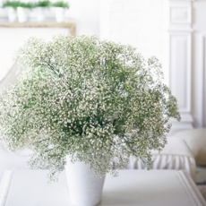 babys-breath-centerpiece-realsimple