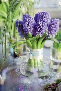 hyacinth_14