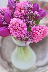 hyacinth_16
