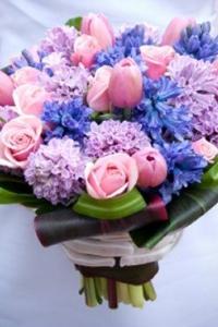 hyacinth_29