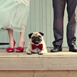 pitomcy-na-svadbe-14