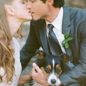 pitomcy-na-svadbe-19