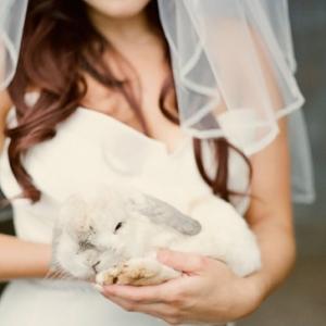 pitomcy-na-svadbe-22
