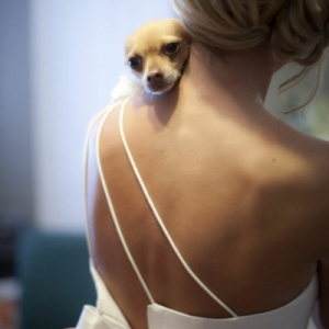 pitomcy-na-svadbe-27