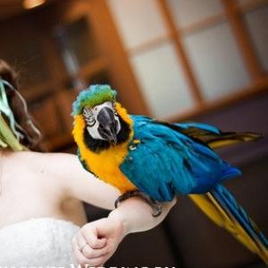 pitomcy-na-svadbe-47