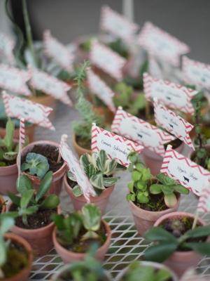 plants_