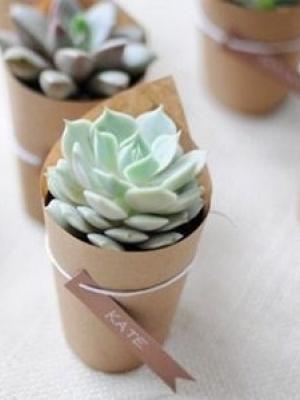 plants_25