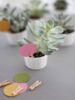 plants_41
