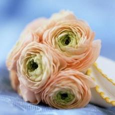 ranunculus-bridal-bouquet-winter-wedding-peach-green-ivory
