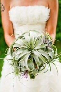 tillandsia_bouquet_32