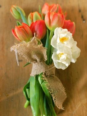 tulip_04