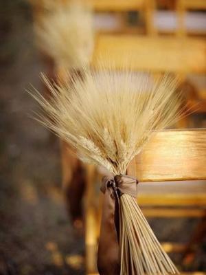 wheat_wedding_16