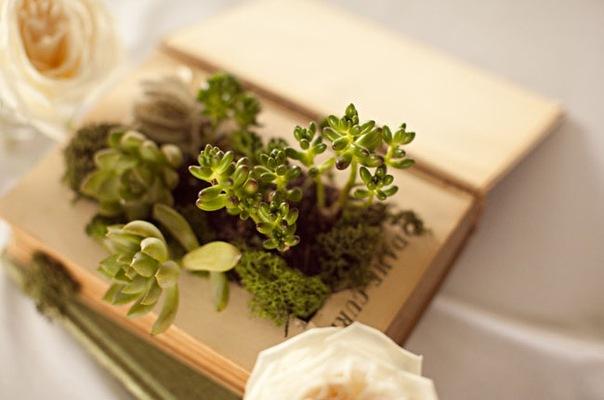 зеленая свадьба сукуленты в книге