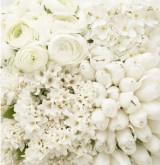 10 цветов для белого букета невесты