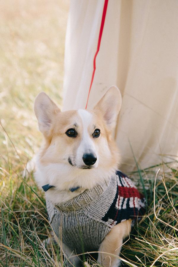 8-festive-styled-wedding-winter-woods-corgi-holiday-sweater
